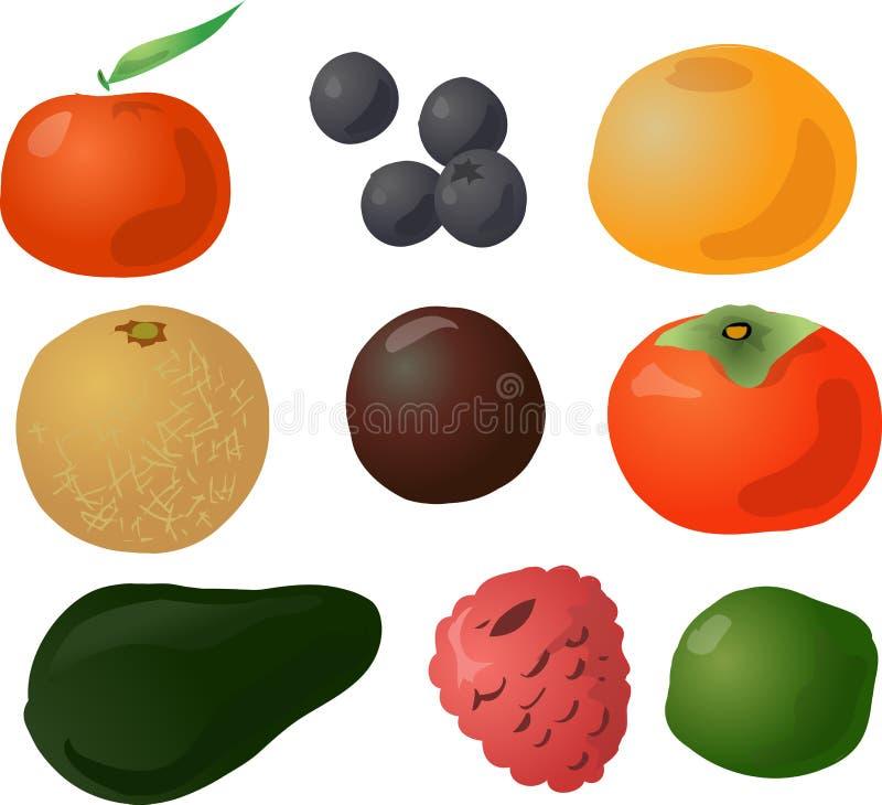 Fruits illustration. Illustration of fruits, hand-drawn look: tangerine, blueberries, grapefruit, melon, passionfruit, persimmon, avocado, raspberry, lime Vector vector illustration
