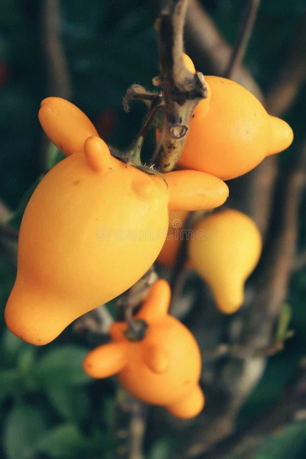 Fruits jaunes image stock