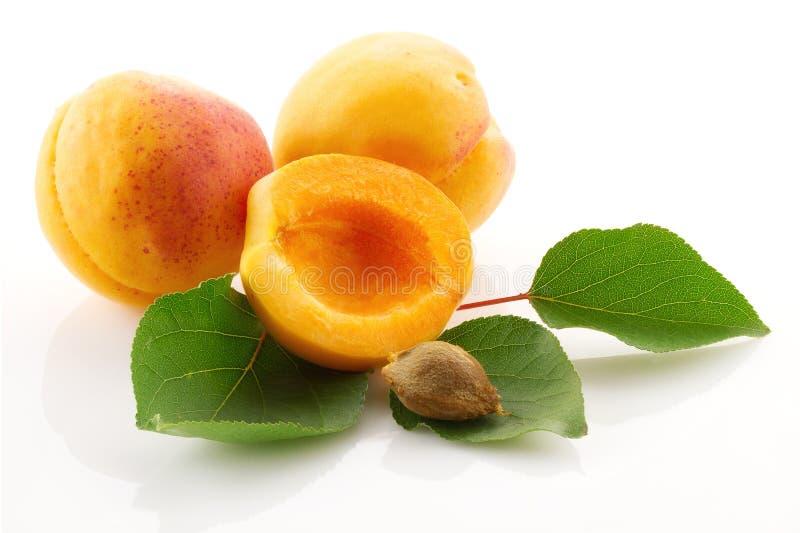 Fruits juteux mûrs et feuilles vertes de fin d'abricot  photo libre de droits
