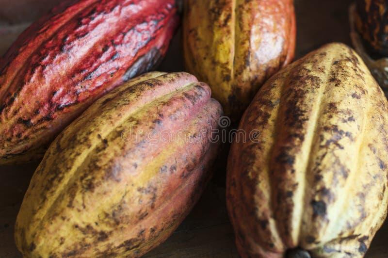 Fruits mûrs de cacao images libres de droits