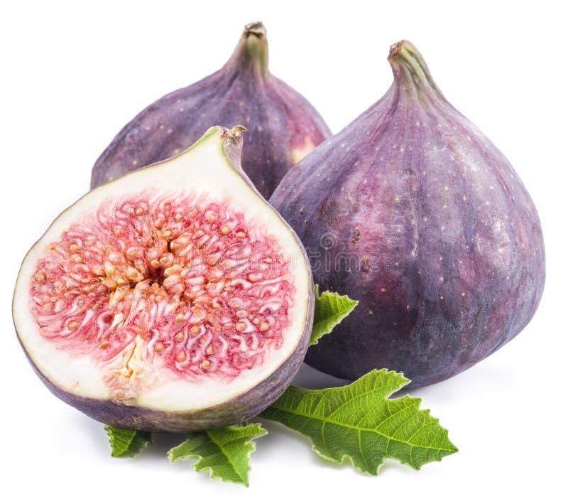 Fruits mûrs de figue sur le fond blanc photos libres de droits