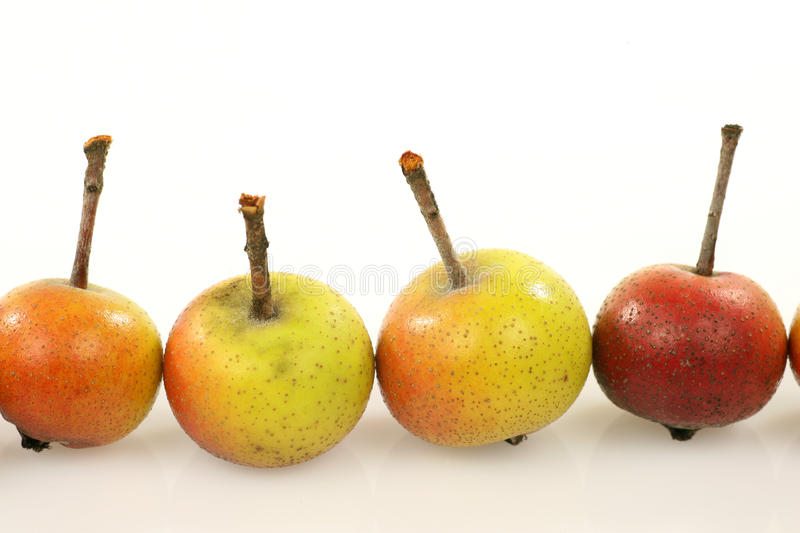 Fruits of the Malus Pumila stock photos
