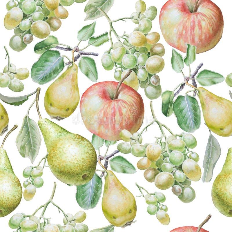 fruits pattern seamless Яблоко, виноградины и груша изображение иллюстрации летания клюва декоративное своя бумажная акварель лас иллюстрация вектора