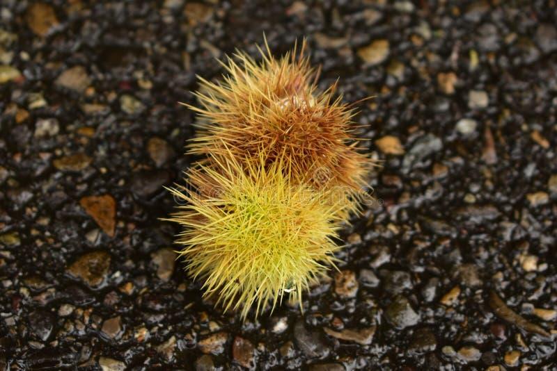 Fruits pelucheux image stock