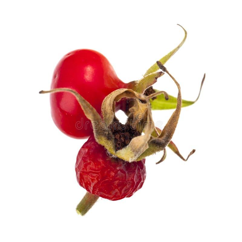 Fruits roses de chien photo stock