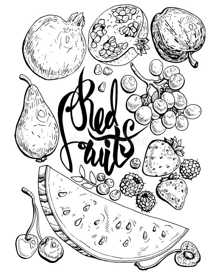 Fruits rouges 1 illustration stock