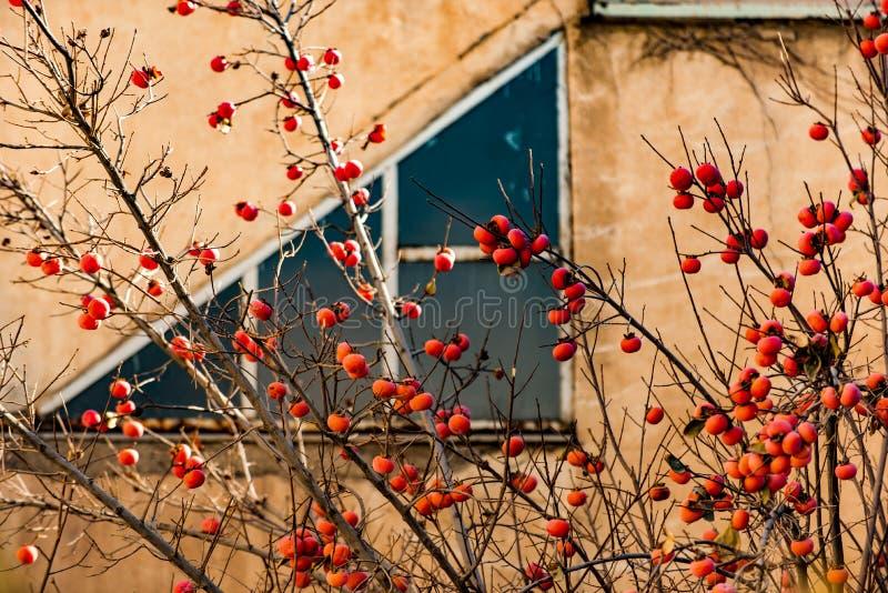 Fruits savoureux parmi l'atmosphère urbaine photo libre de droits