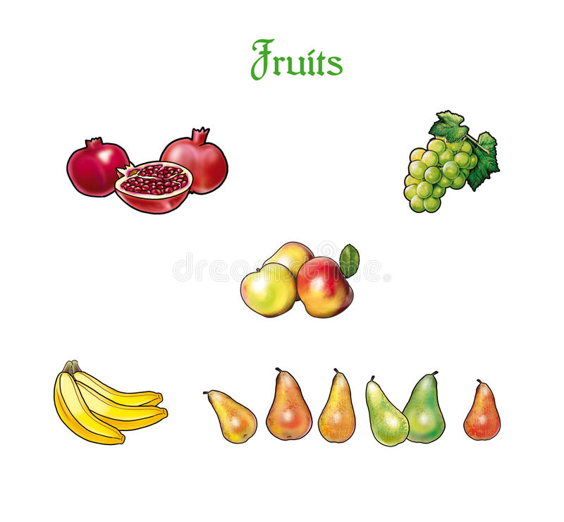 Fruits. Set pomegranate, apples, grapes, pears and bananas.  on white background, Illustration. For Art Print Web design vector illustration