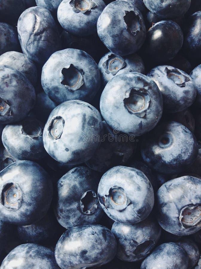 Fruits summer taste black blueberry royalty free stock images