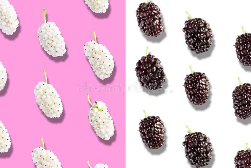 Fruits sur la mûre blanche et noire de fond de couleur - images libres de droits