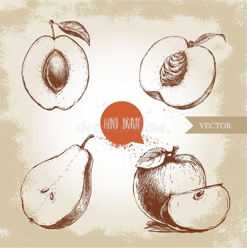 Fruits tirés par la main de style de croquis réglés Abricot, pêche demi avec la feuille, demi poire, composition en pommes Illust illustration de vecteur