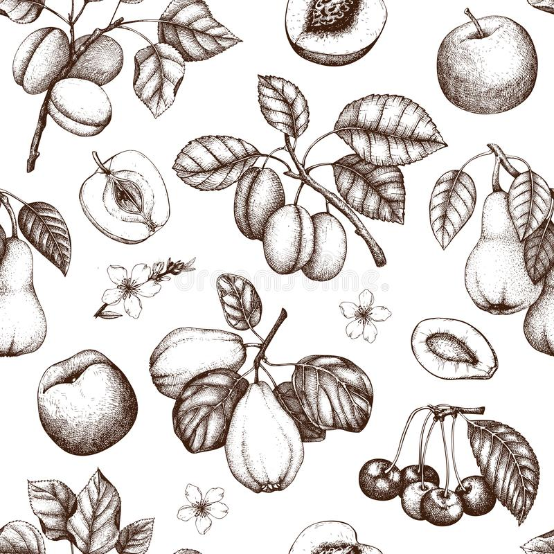 Vintage background with ripe fruits and berries - apple, pear, cherry, peach, apricot trees. Hand drawn harvest illustrations. S. Ummer or autumn design vector illustration