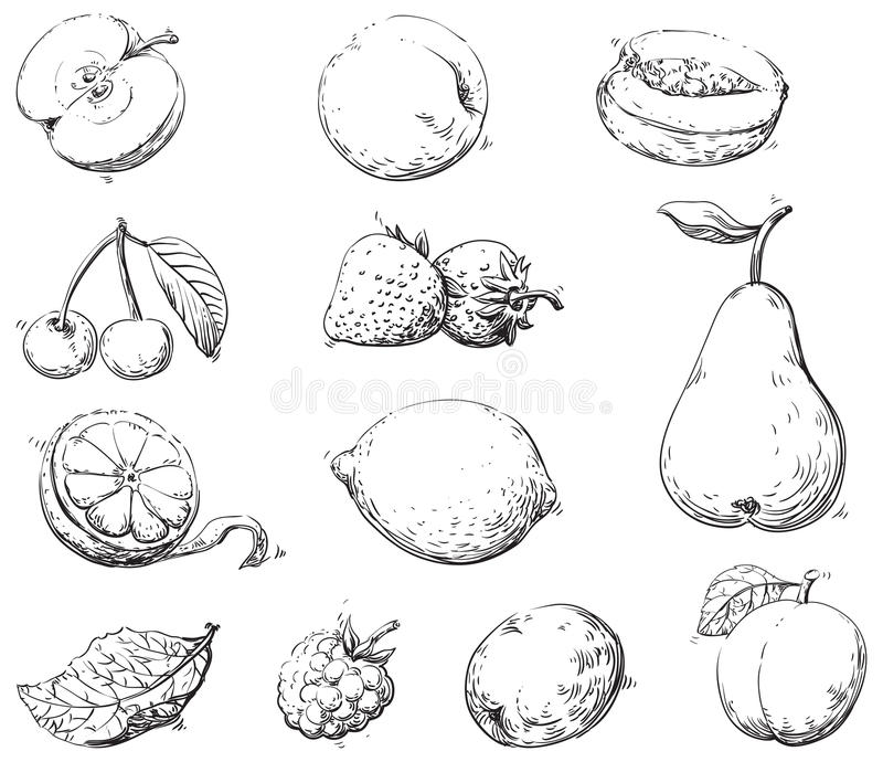 Fruits. Vector set of fruits at engraving style