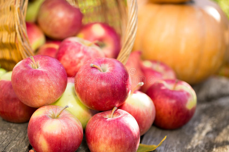 Download Fruits And Vegetables In Autumn Stock Photo - Image: 33370950