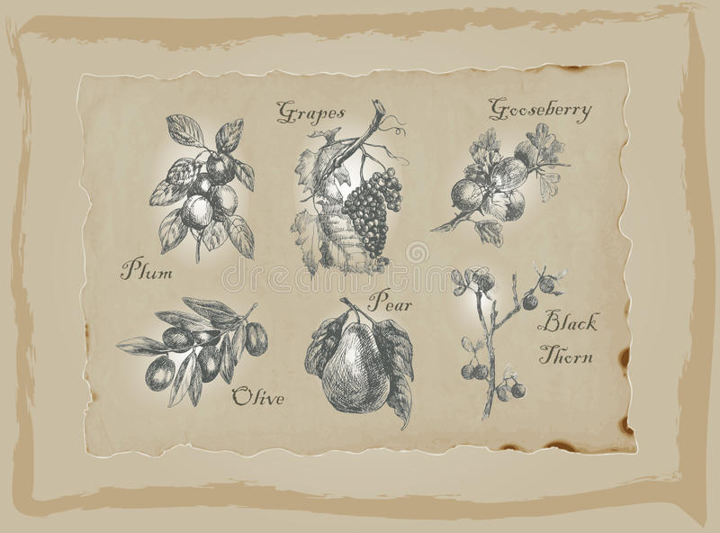 Fruits and Vegetables - An hand drawn pack. Freehand drawing. vector illustration
