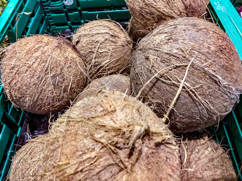 The fruits are voluminous drupes, commonly known as coconuts, weighing about 1 kg. They are formed after 2 weeks from flowering and grow rapidly for about 6 royalty free stock photos
