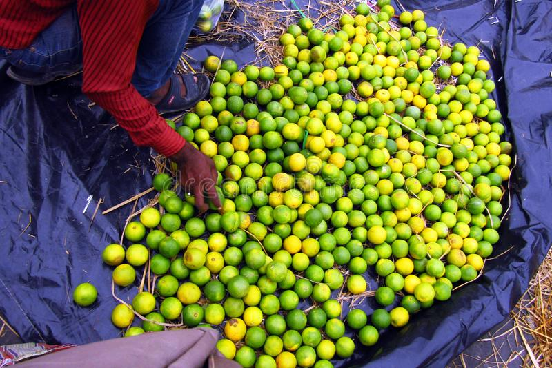 Fruits in the wholesale market. Buyers and sellers meet in the wholesale fruits market of India royalty free stock photography