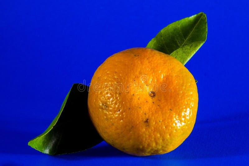 Frukt citrus, Clementine, jordbruksprodukter royaltyfri foto