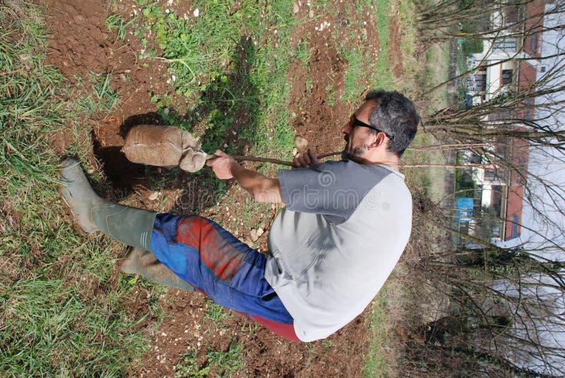 frukt för 2 bonde som planterar treen arkivfoton
