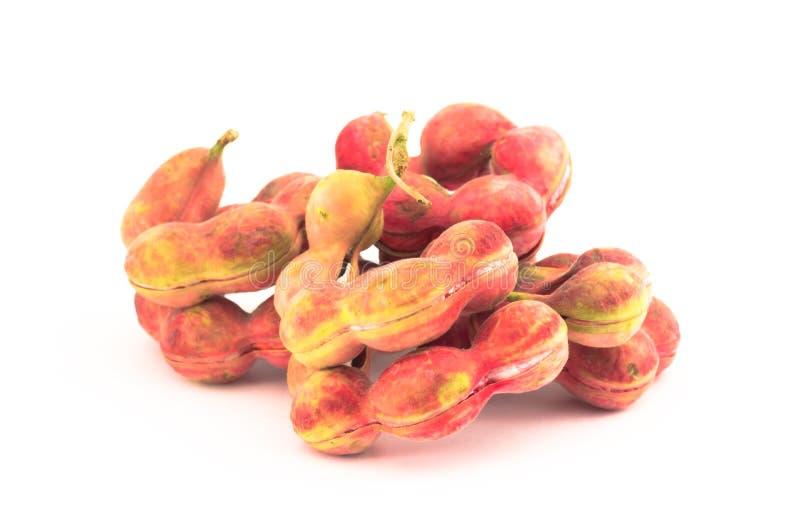 Frukt för Manila tamarindfrukt  arkivfoton