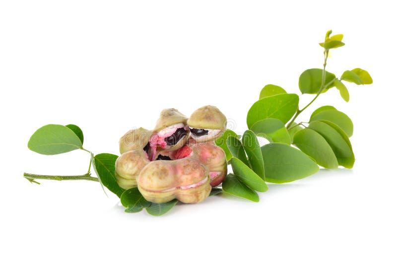 Frukt för Manila tamarindfrukt med bladet på vit arkivfoto