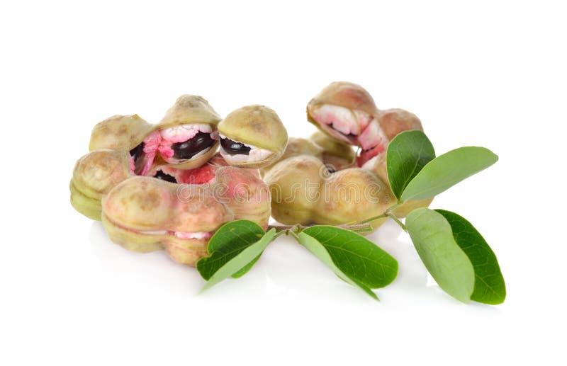 Frukt för Manila tamarindfrukt med bladet på vit arkivbild