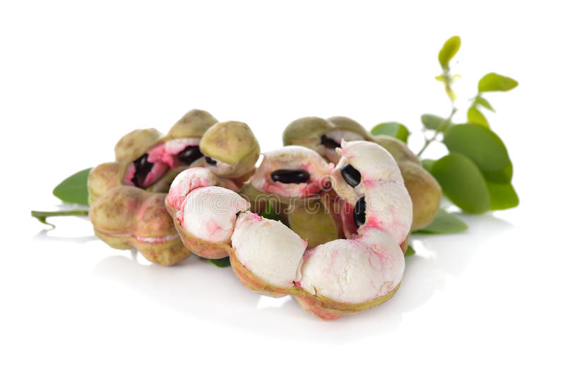 Frukt för Manila tamarindfrukt med bladet på vit fotografering för bildbyråer