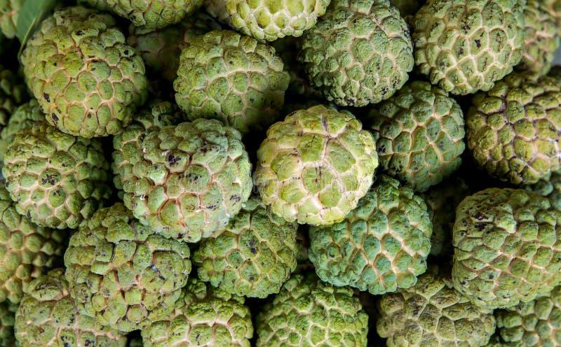 Frukt för vaniljsåsäpple som ska säljas i ny marknad Annonareticulata Grupp av nytt organiskt grönt socker för tropisk frukt för  arkivfoto