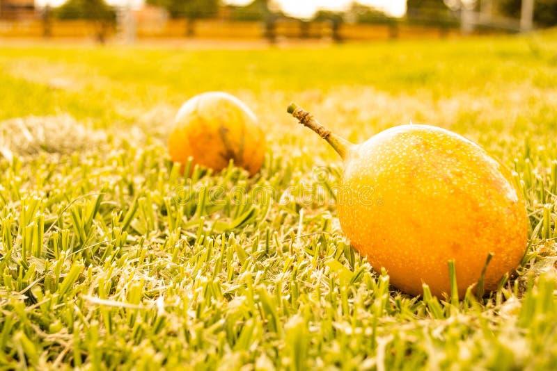 Frukt i gräset arkivfoton