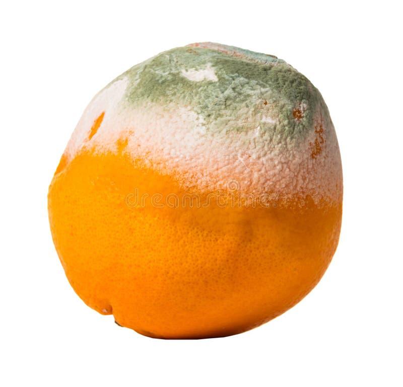 Fruktapelsin som täckas med mjöldagg arkivfoto