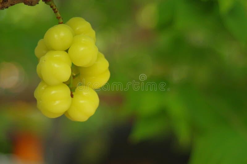Frukter med det höga innehållet för vitamin C arkivbilder