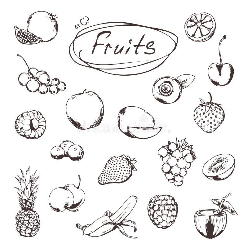Frukter och bär, skissar vektor illustrationer