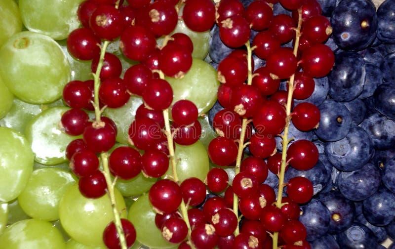 frukter tre arkivfoton