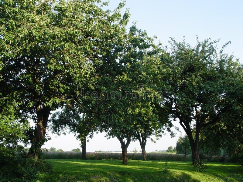 fruktfruktträdgård royaltyfri foto