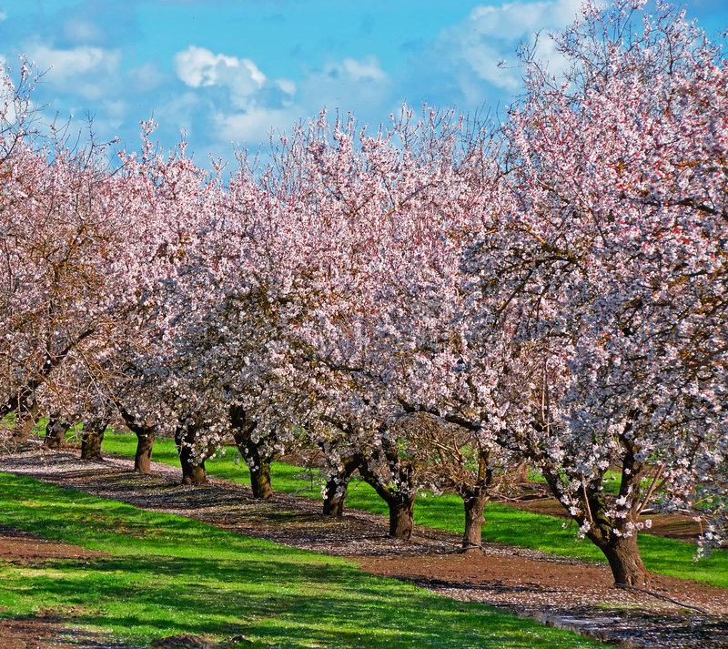 fruktfruktträdgårdtree arkivfoto
