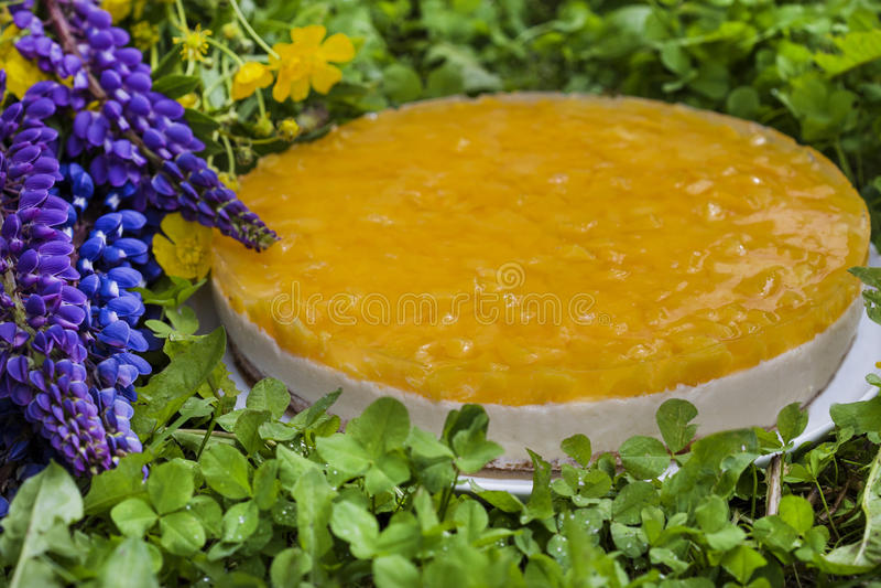 Fruktkaka med persikan, gelé och mousse royaltyfria bilder