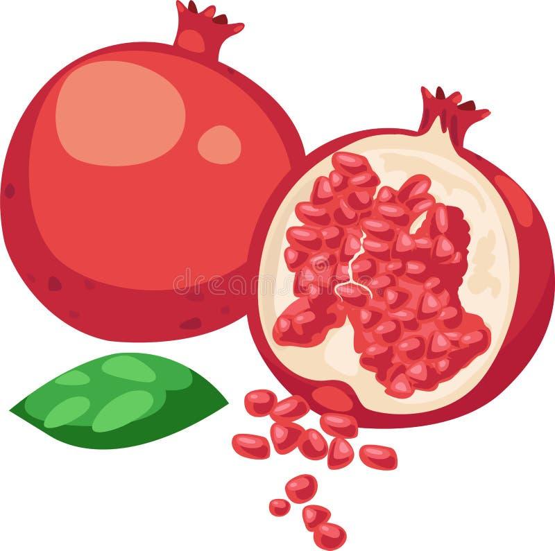 fruktpomegranatevektor stock illustrationer