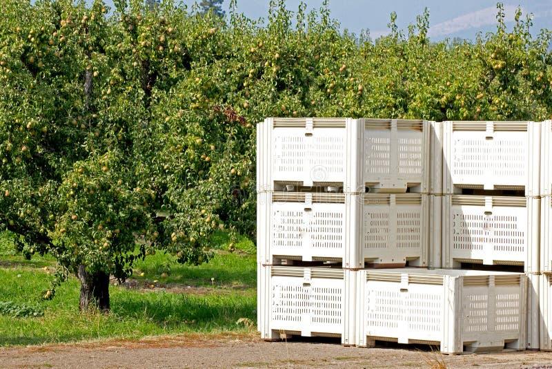 Fruktspjällådor i fruktträdgård arkivbild