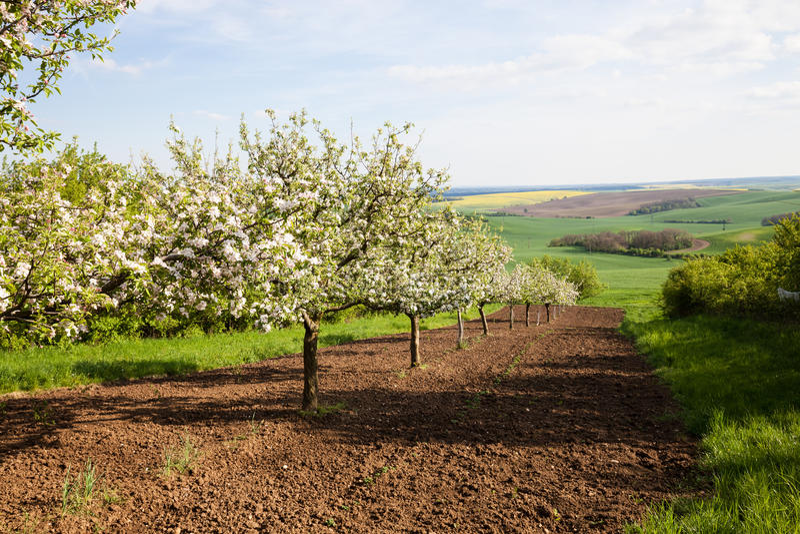 Fruktträd royaltyfri fotografi