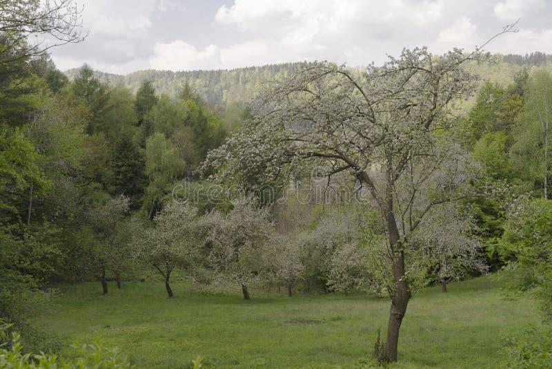 Fruktträd royaltyfria bilder
