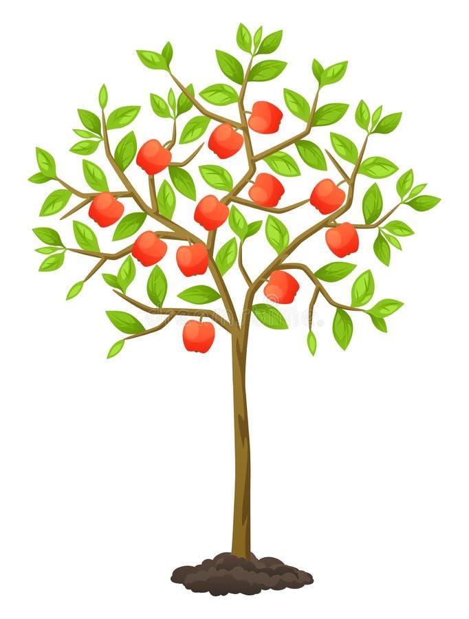 Fruktträd med äpplen Illustration för jordbruks- häften, reklambladträdgård royaltyfri illustrationer