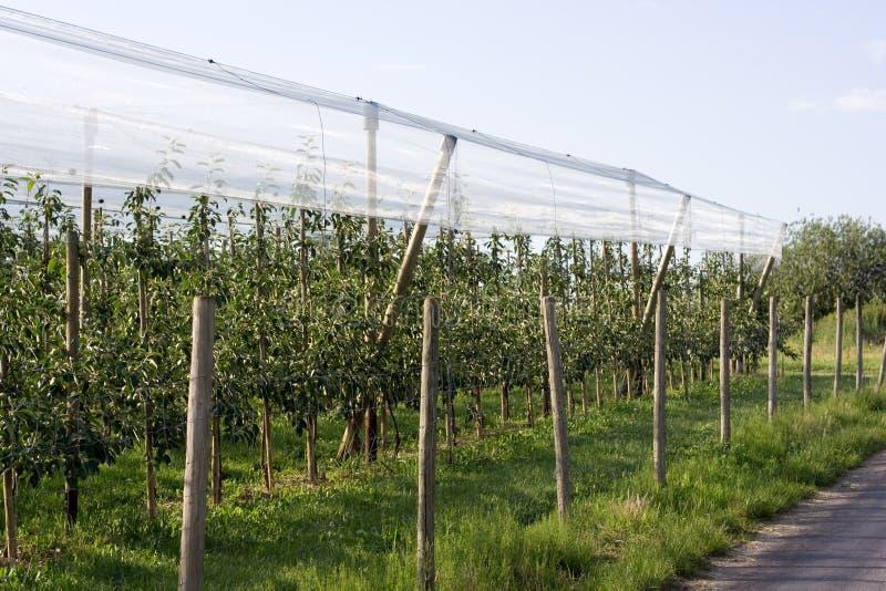 Fruktträdgård royaltyfri fotografi