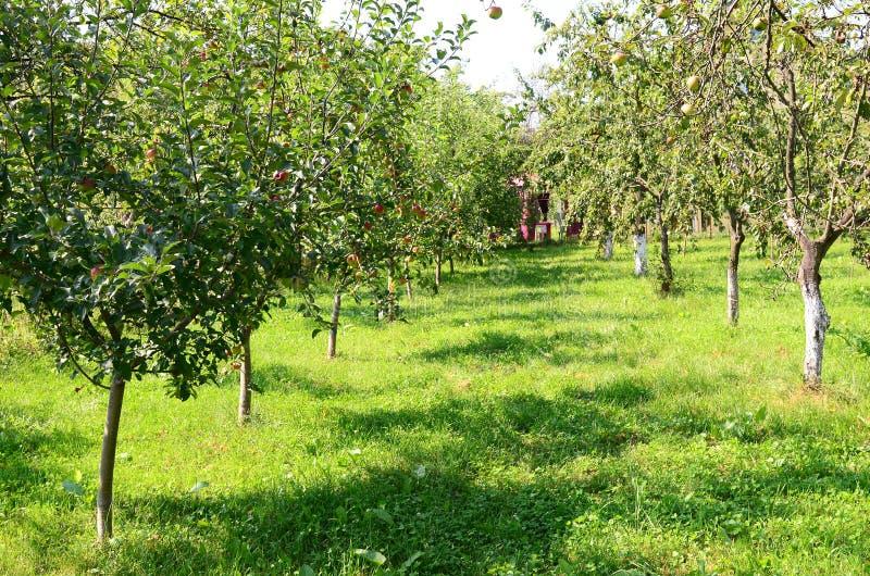 fruktträdgård arkivfoto