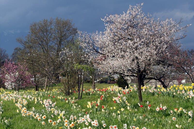 fruktträdgård royaltyfria bilder