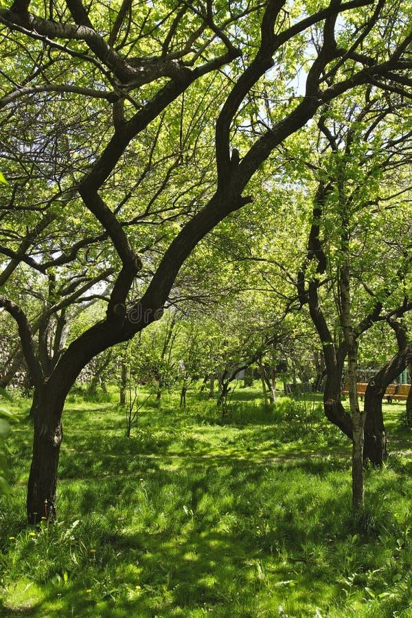 Fruktträdgård, Armenien royaltyfri fotografi