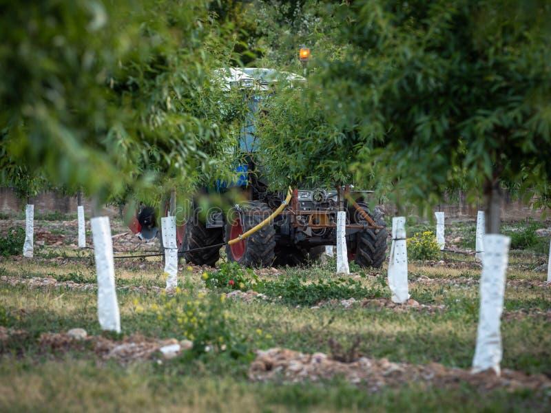 Fruktträdgård av unga persikor i vår med traktoren som gör jordbruks- arbete arkivbild