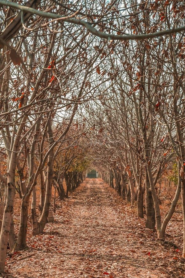 Fruktträdgård i vinter royaltyfri bild