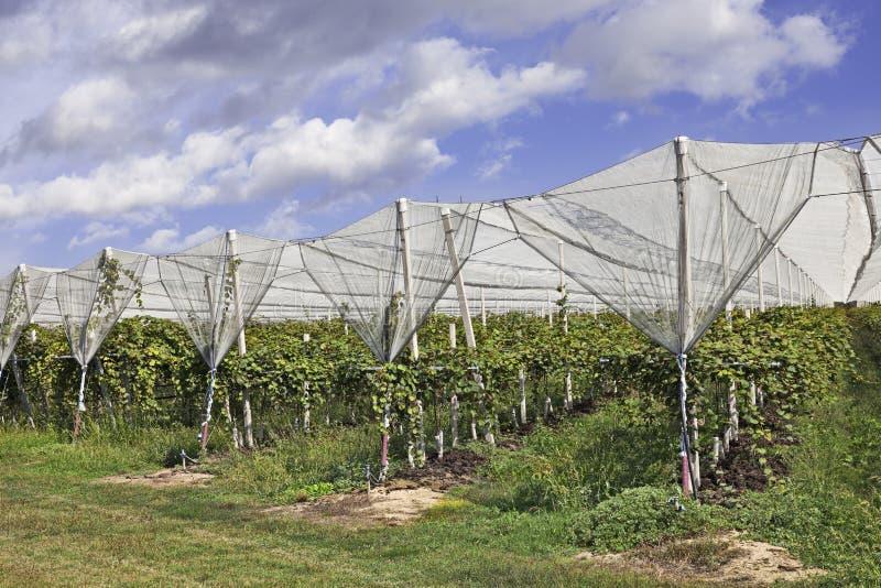 Fruktträdgården med anti-hagel förtjänar royaltyfri fotografi