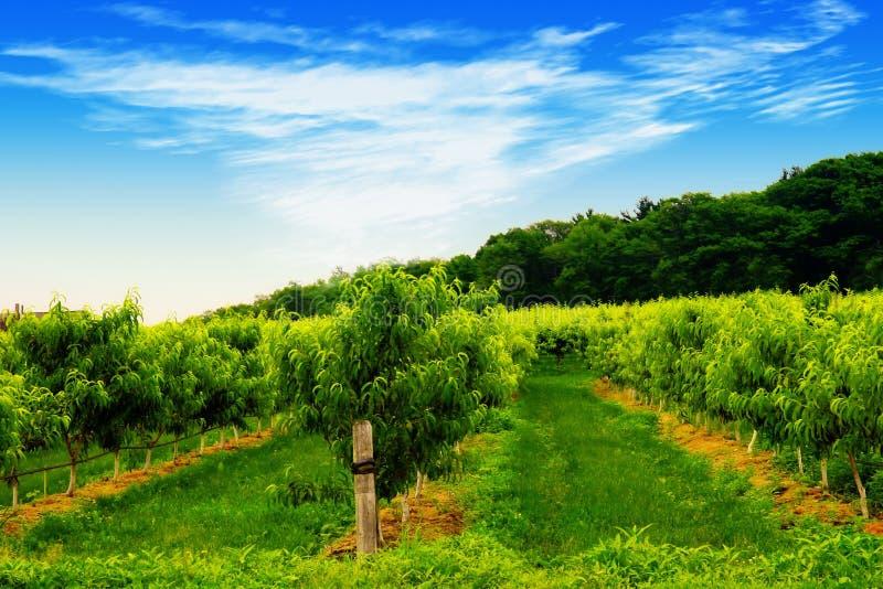 fruktträdgårdfjäder royaltyfri foto