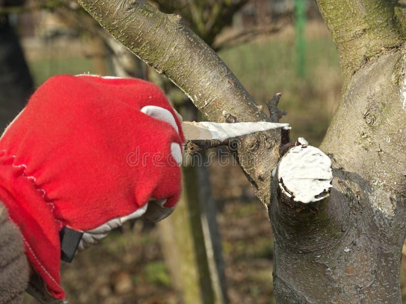 Fruktträdvårskydd royaltyfri foto
